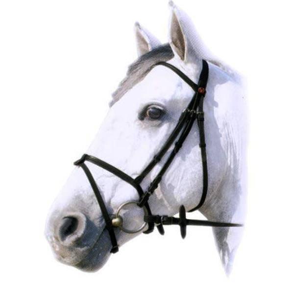 Уздечка для лошади: виды, составляющие, строение