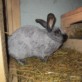 Декоративные кролики: уход и содержание в домашних условиях, чем кормить, как приручить?
