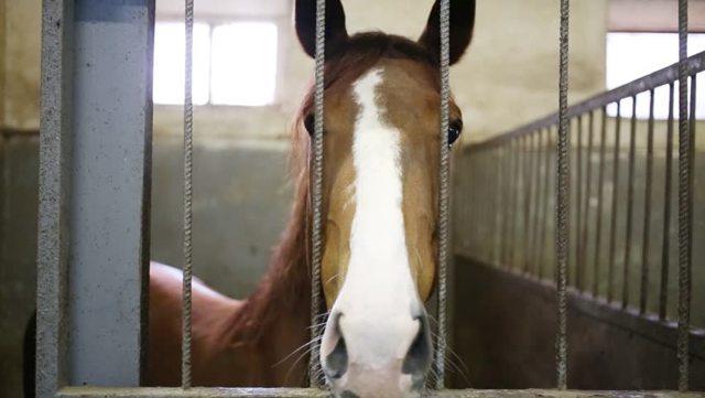 Как научить лошадь поклону: подготовка, способы дрессировки