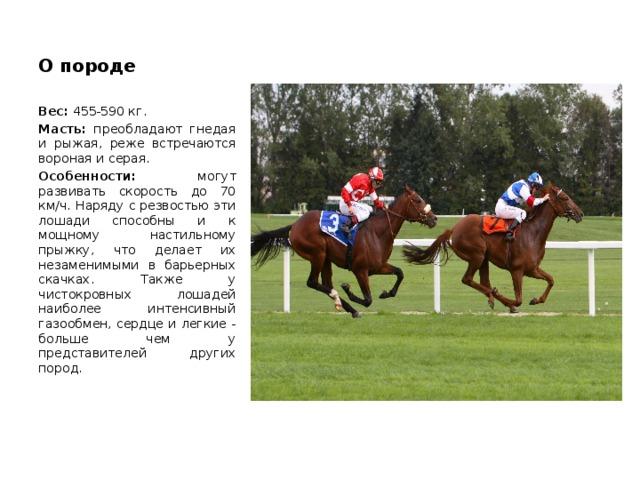Скорость лошади: средняя и максимальная скорости лошади. какая порода самая быстрая в мире? рекорды быстроты. взаимосвязь аллюра и скорости
