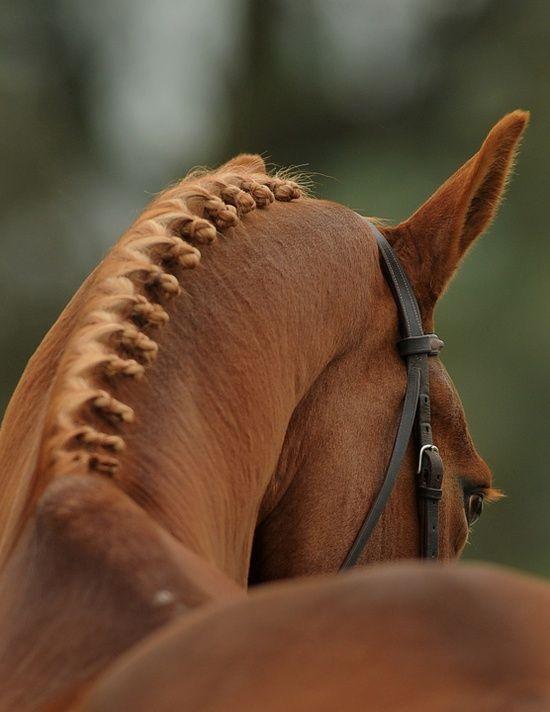 Почему у лошади может подняться или упасть температура тела