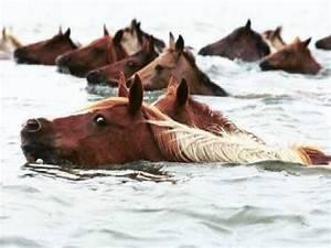Причины такого явления, как загнанные лошади