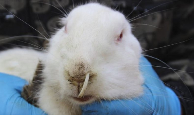 Отсутствие аппетита у кролей: что делать?