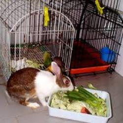 ✅ чем кормить кроликов для быстрого роста и веса: что лучше для набора, стимуляторы - tehnomir32.ru