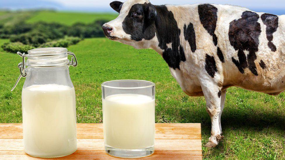 Влияние различных кормов на вкус молока