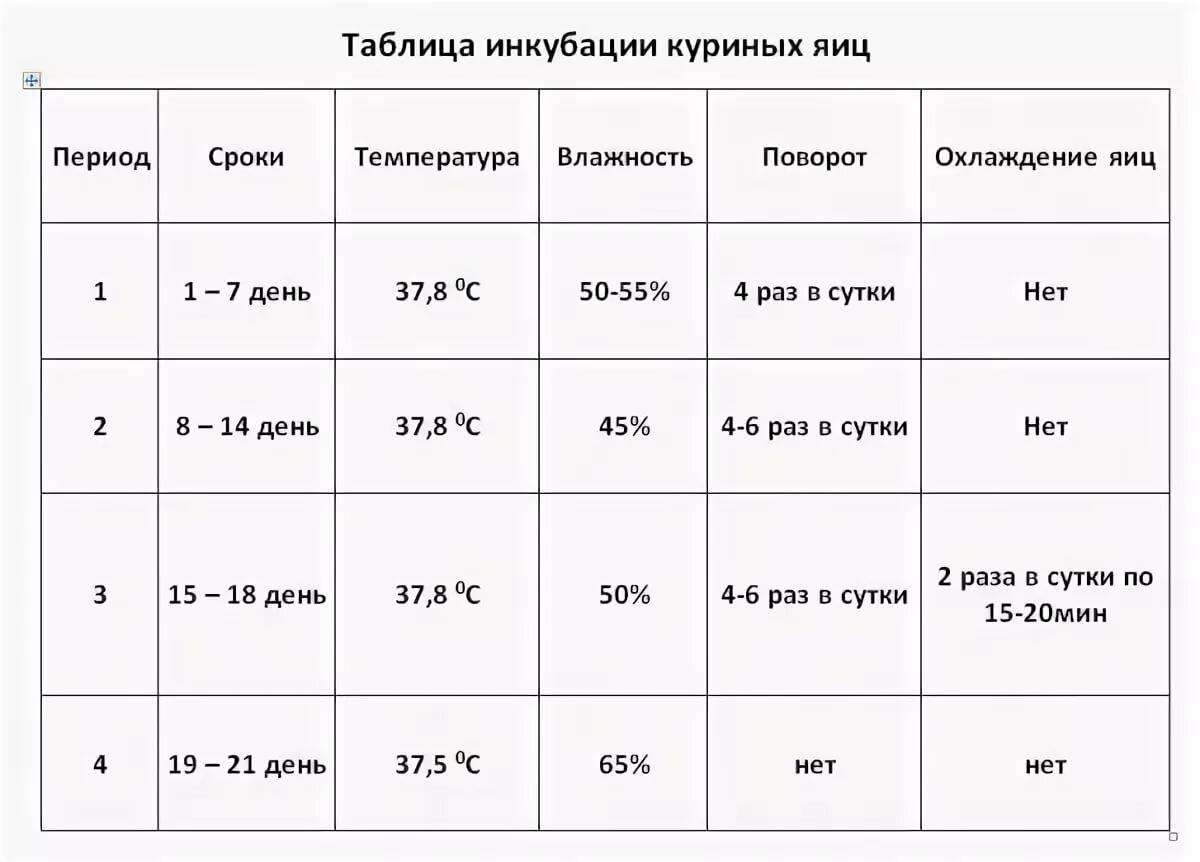 Инкубация куриных яиц - режим инкубации в домашних условиях, температура и влажность, таблица