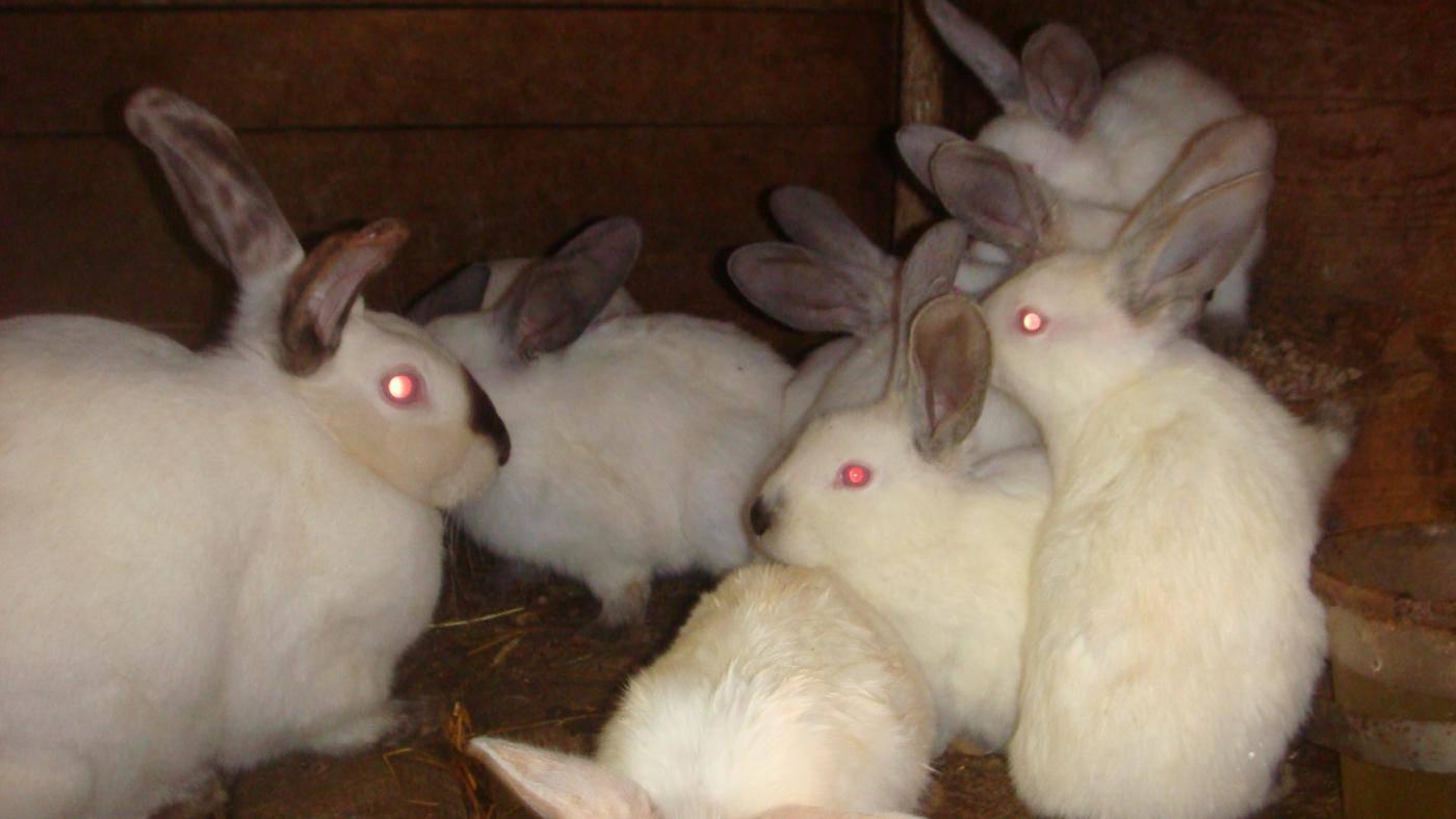 Как правильно брать кролика на руки из клетки: декоративного и обычного