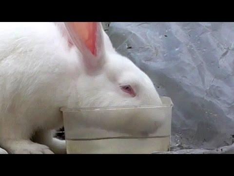 Причины, по которым кролик стал вялым и перестал есть