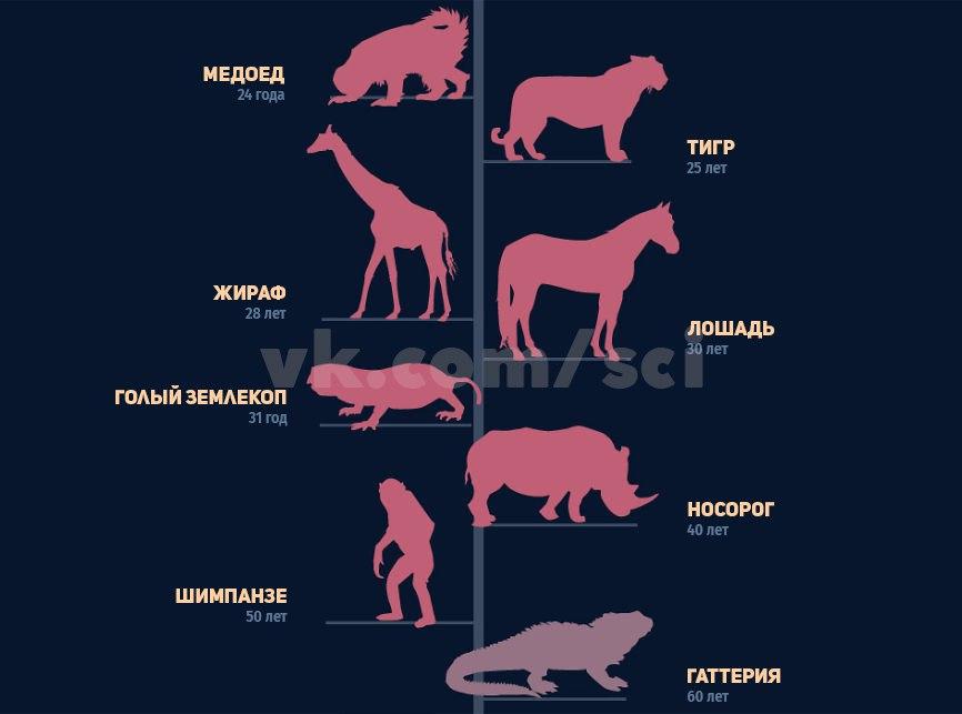 Сколько живут лошади - продолжительность жизни составляет в среднем 20 лет
