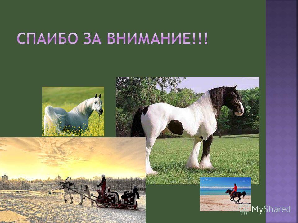Как обучать лошадь: как научить коня выполнять команды в домашних условиях