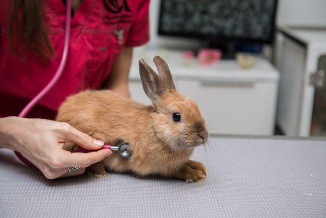 Кролик не ест и не пьет: что делать