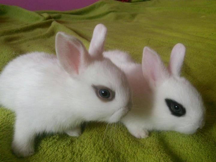 Породы декоративных кроликов: фото и описания пород