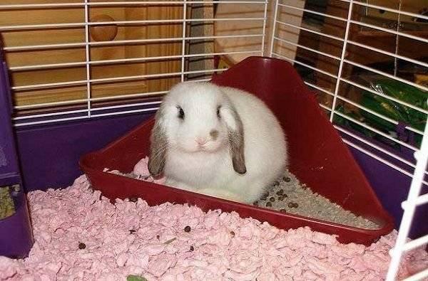 Вздутие живота у кроликов: причины и лечение, симптомы и почему происходит, что дать, какие заболевания