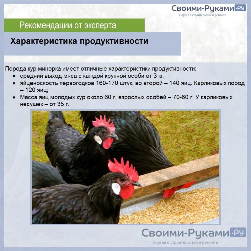 Самые подходящие породы кур для сибири: обзор лучших
