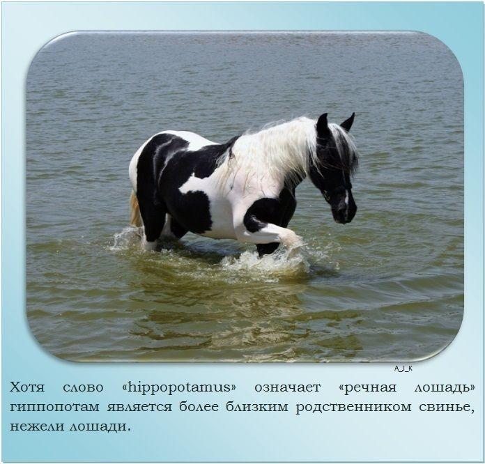 Самые интересные факты о лошадях | vivareit