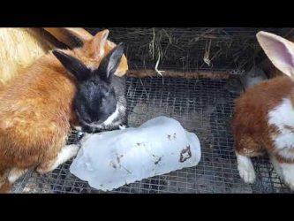 Стерилизация декоративных кроликов: нужна ли и сколько стоит