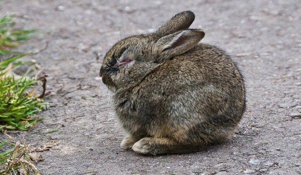 Отсутствие аппетита у кролика. возможные причины и что делать.