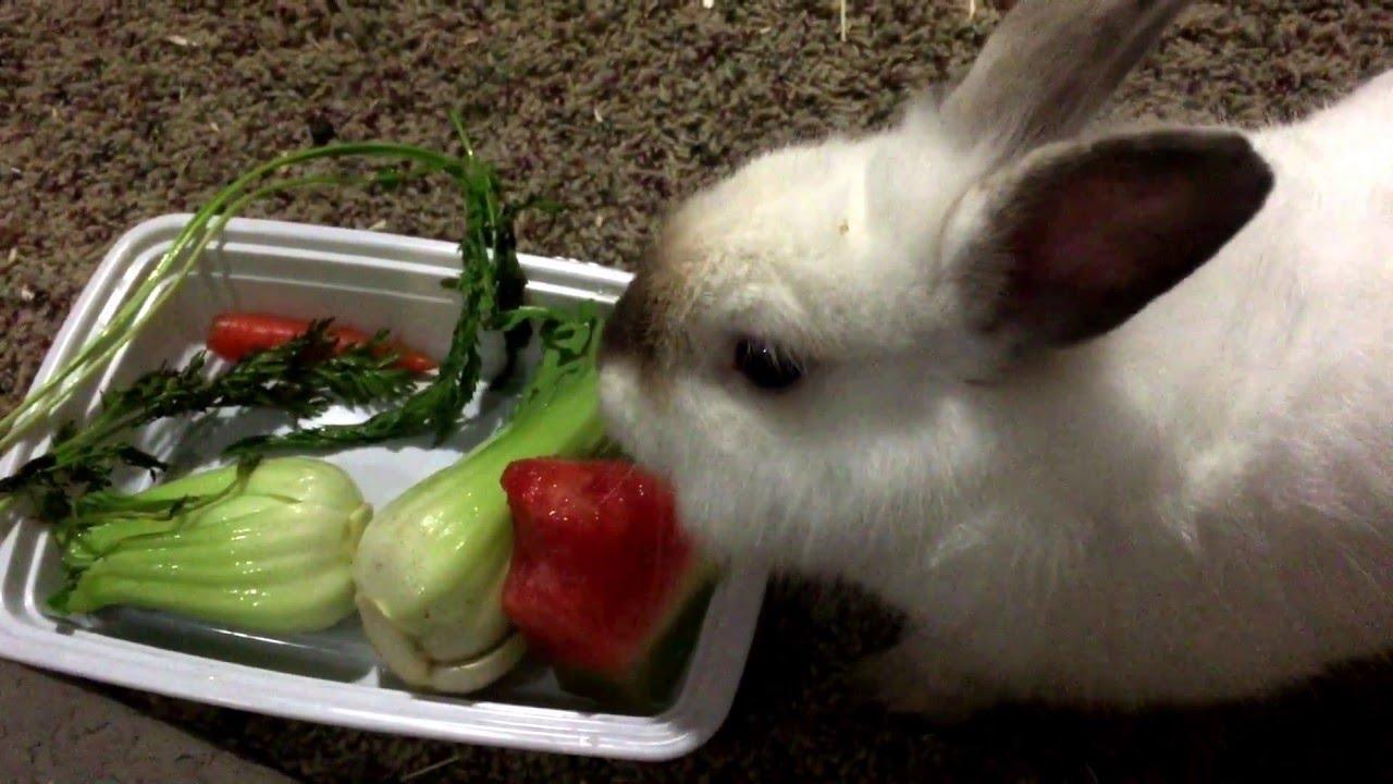 Правила кормления кроликов в домашних условиях для начинающих