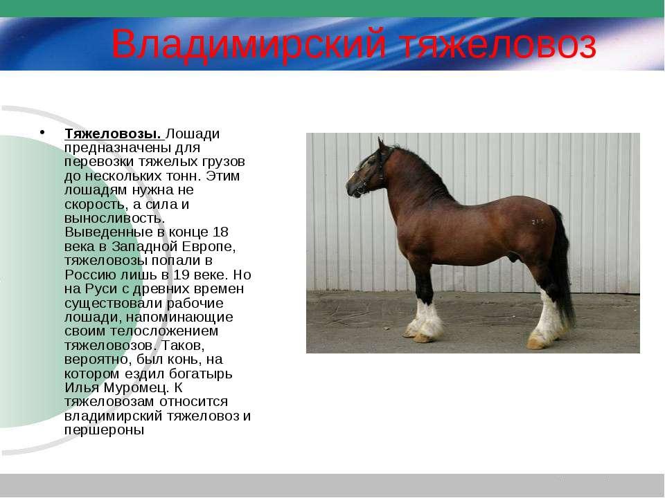 Лошадь – описание, виды, породы, питание, размножение, фото