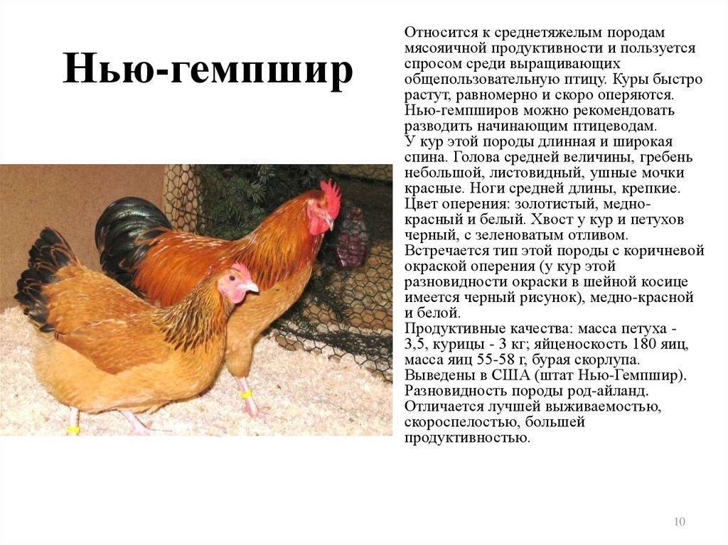 Определяем возраст несушки: как отличить молодую курицу от старой