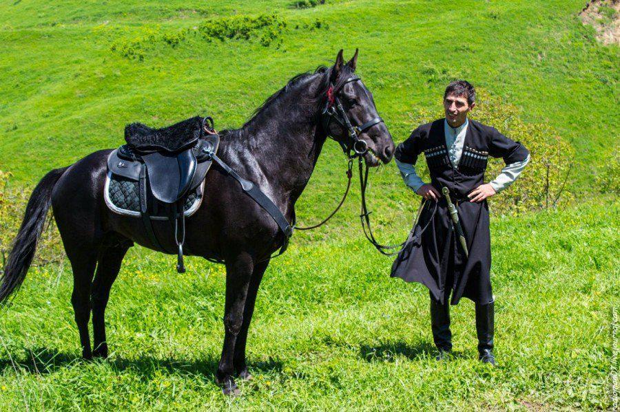 Кабардинская порода лошадей: история, описание, фото | мои лошадки