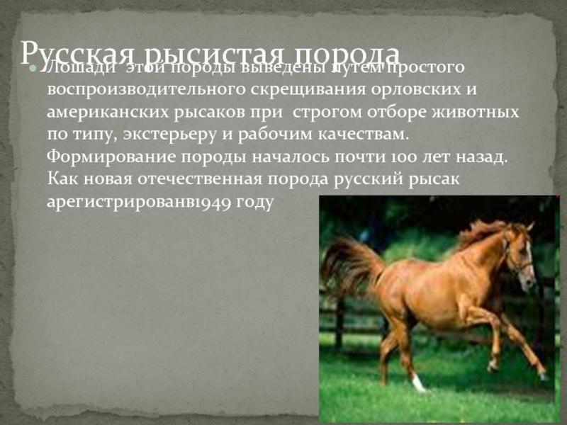 Русская рысистая порода лошадей: характеристика, достоинства и недостатки