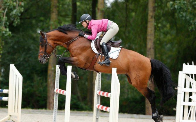 Как делать спортивные ставки на лошадиные скачки