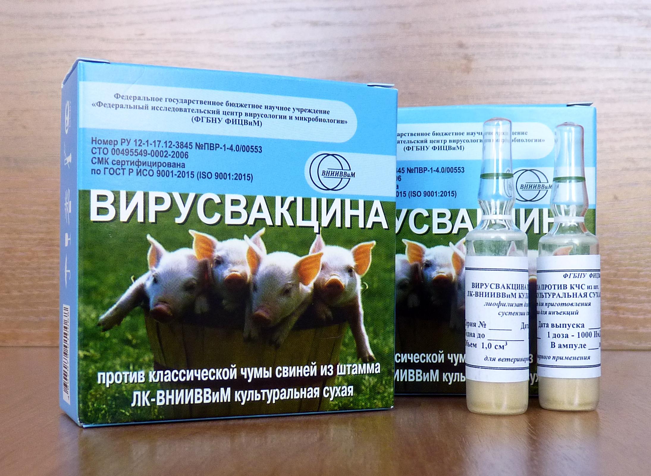 Схемы и правила вакцинации свиней