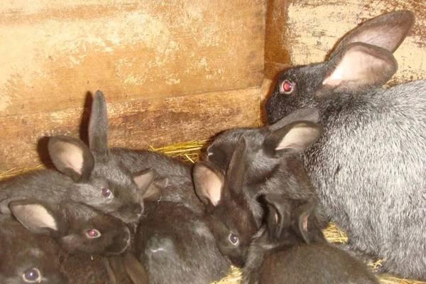 Кролики умирают без видимых причин как лечить болезни кроликов - домашний уют от agrostroy2.ru