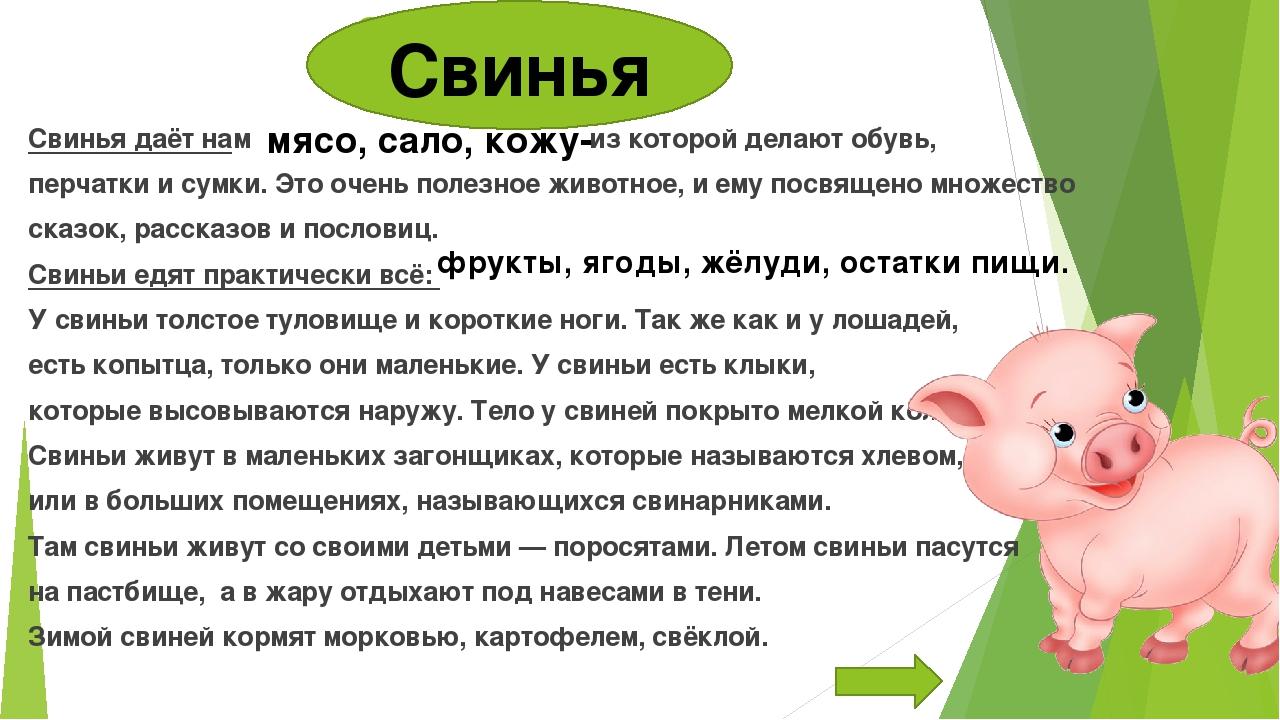 ✅ все о болезнях поросят: симптомы, как выглядят животные, лечение и профилактика - tehnomir32.ru