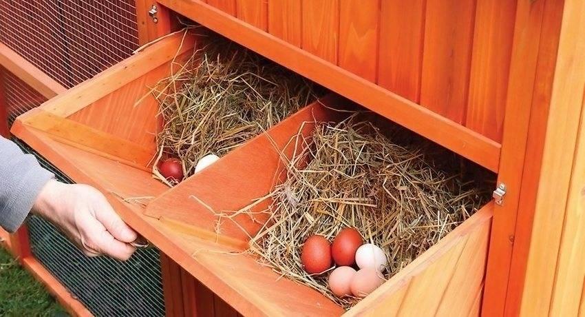 Гнездо для кур несушек с яйцесборником своими руками (чертежи)