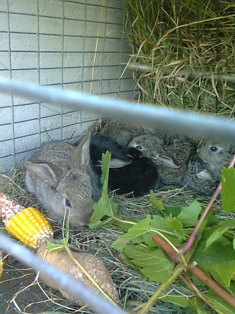 Какие ветки можно давать кроликам зимой: сосновые или еловые