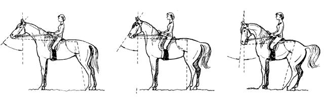Как управлять лошадью во время прогулки верхом