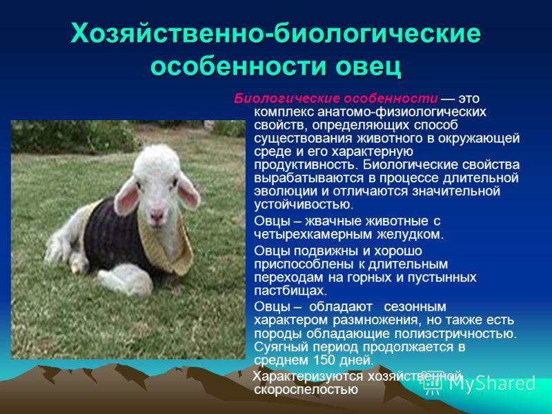 Биологические особенности коров