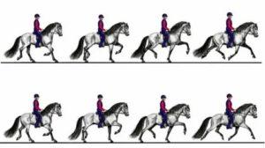 Бег лошади: какой вид бега считается самым стремительный? как кони бегают рысью и аллюром? самый быстрый и самый неспешный способ передвижения лошади