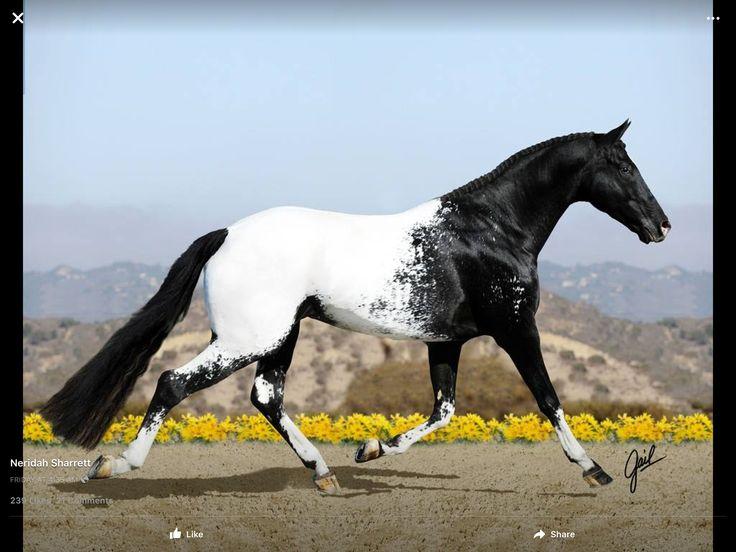 Породы лошадей – представители древних, редких, самых быстрых и маленьких пород