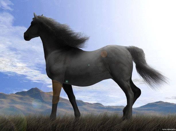 Вся информация о породе лошадей мустанг