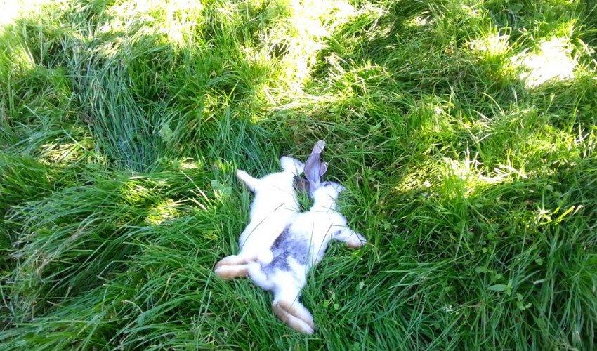 Причины гибели кроликов и способы их решения