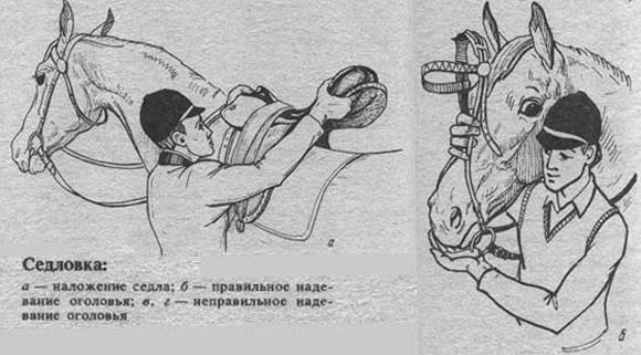 Обзор седел для лошади: дамское, казачье и другие, как сделать седло самим