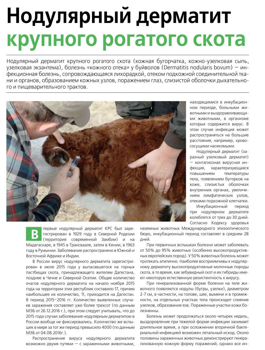 Нодулярный дерматит крупного рогатого скота 2020