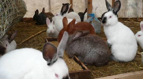 Что любят кушать кролики и чем их кормить |