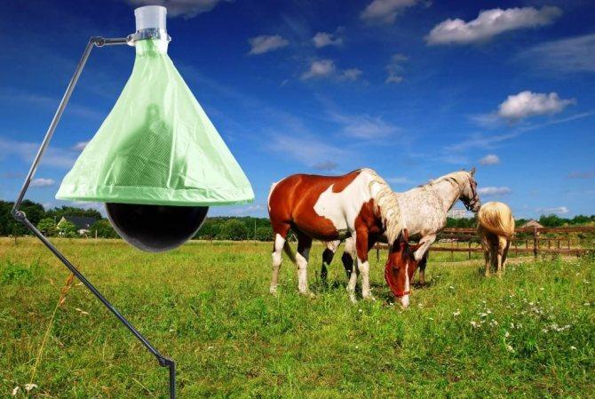 Ловушка для слепней и оводов: какими средствами можно избавиться от насекомых