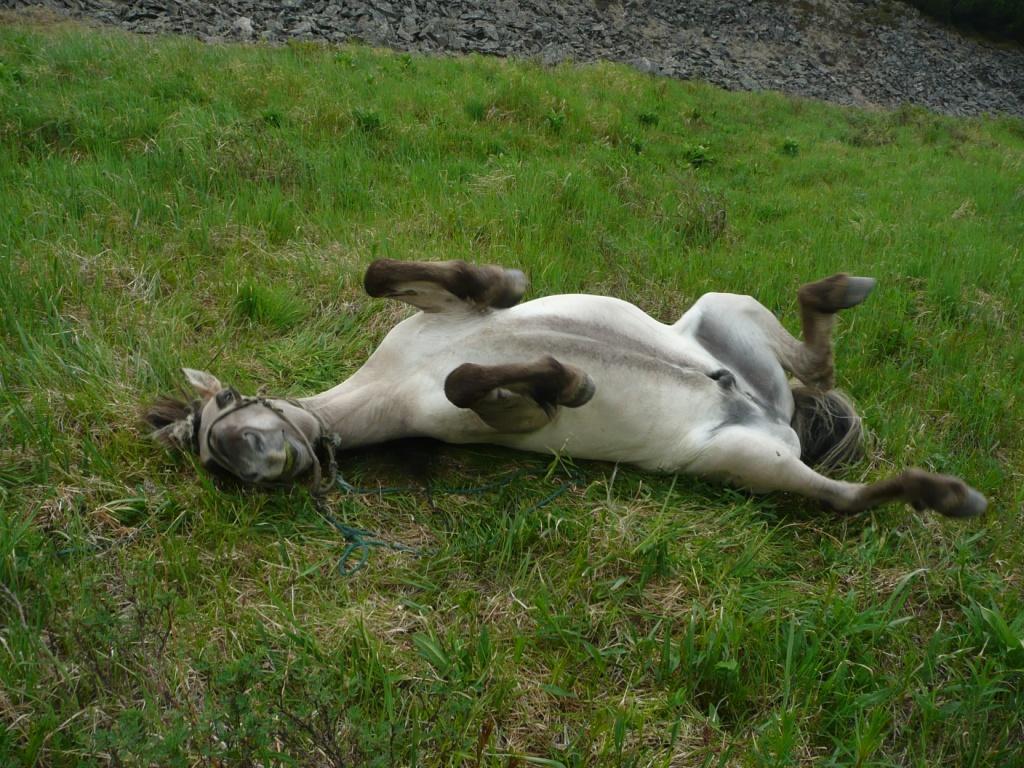 10 неожиданных фактов о том, как спят животные