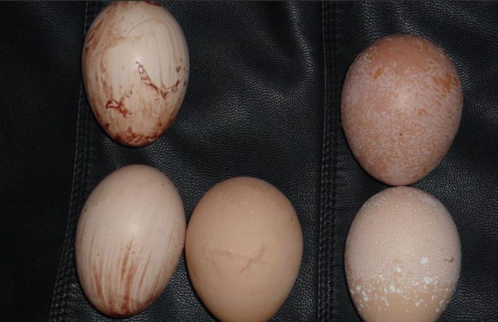 ✅ о мелких яйцах у кур несушек, и что делать, если курицы несут яйца без желтка - tehnomir32.ru