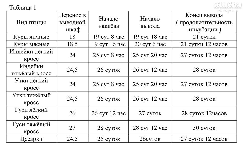 Инкубация индоуток: таблица режима инкубации утиных яиц, инкубационный период мускусных уток. как выводить птенцов в инкубаторе в домашних условиях?