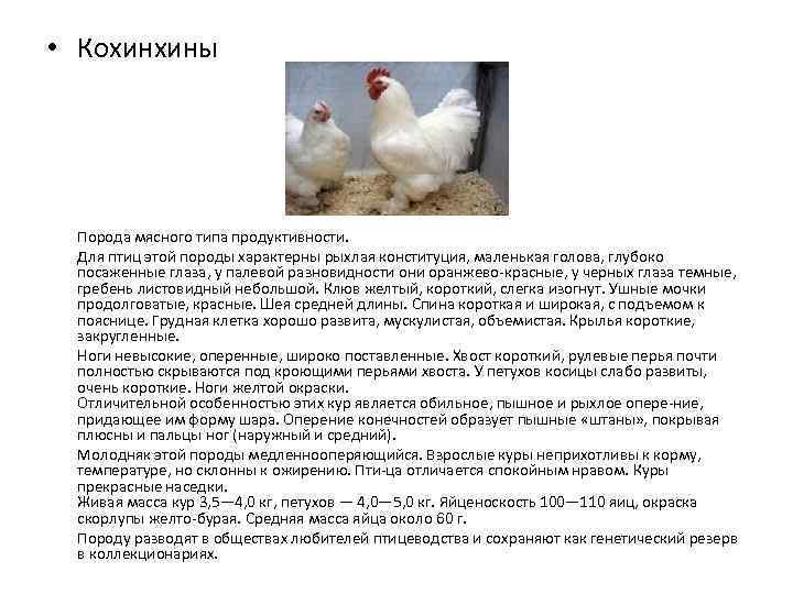 Мясо-яичные породы кур (41 фото): названия и описание лучших пород кур мясо-яичного направления для разведения в домашних условиях