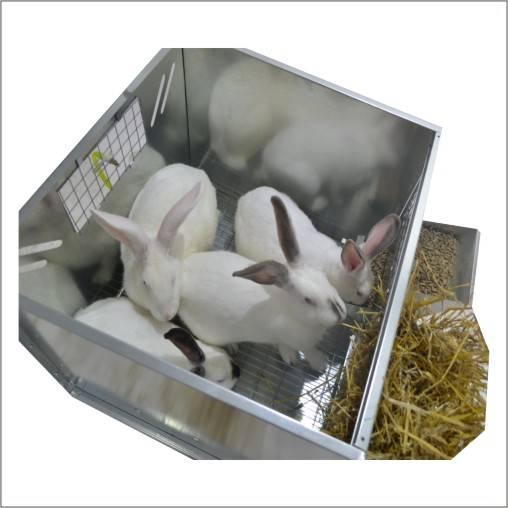 Почему кролики грызут деревянные клетки: причины и решение