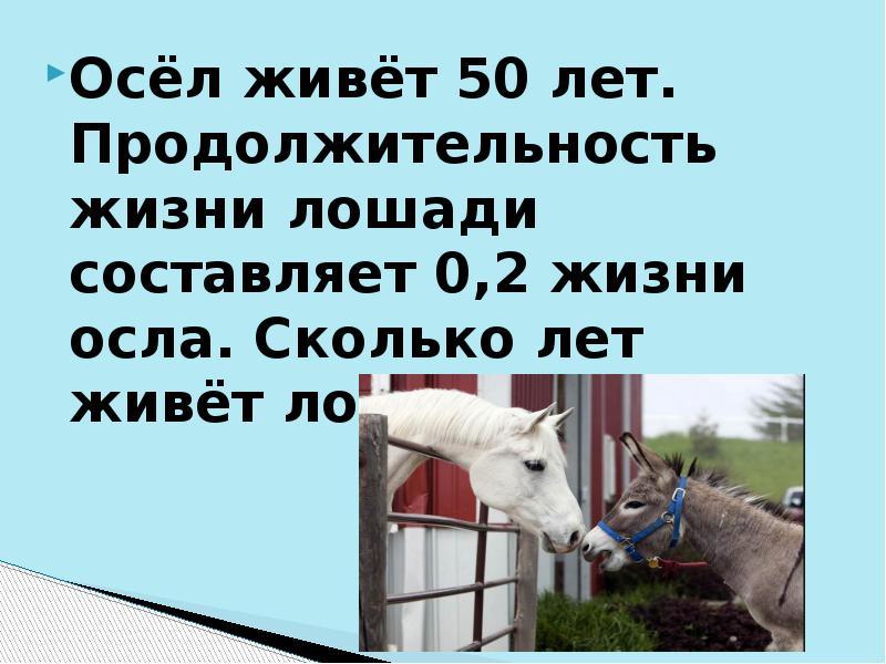 Сколько живут лошади – продолжительность жизни домашних и диких животных, лошади долгожители