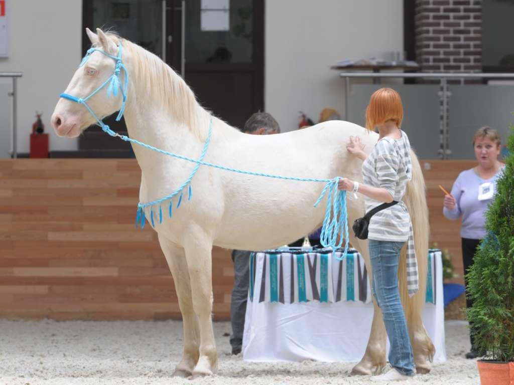 Вес лошади: интересные и невероятные факты |