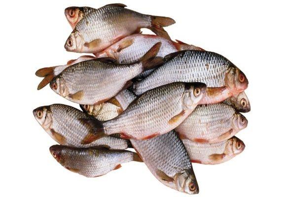 Можно ли давать курам сырую рыбу - рыболовный караван